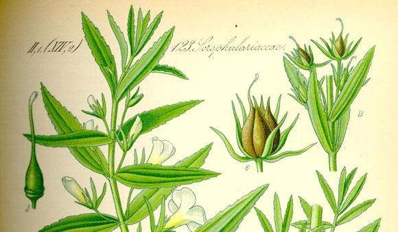360-1-histoire-naturopathie